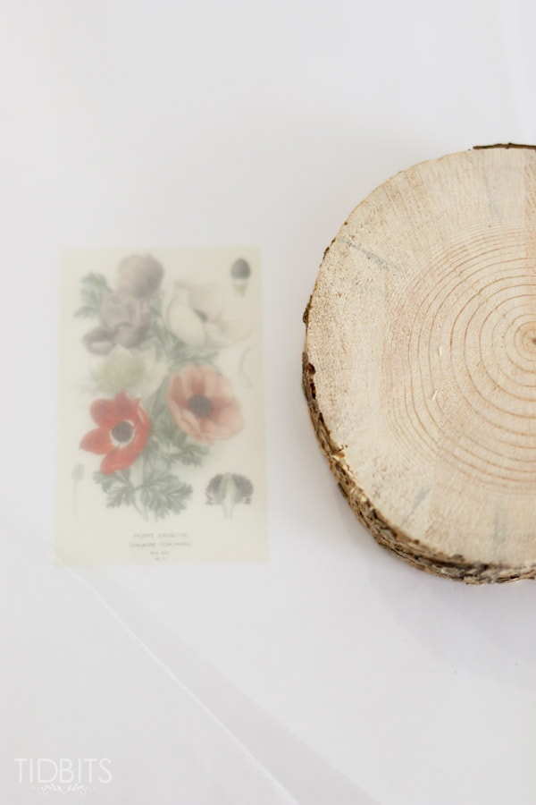 Botanical-wood-slices-5