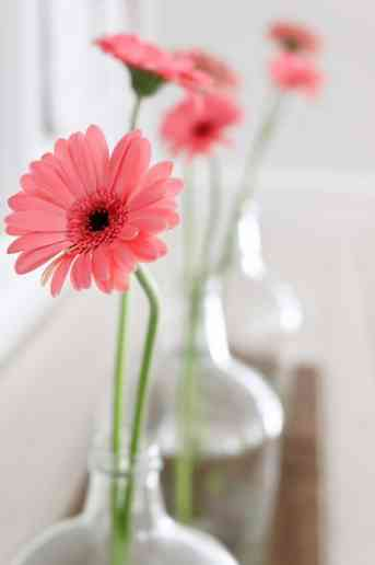 8 Ways to make the most of your floral arrangements. Bring fresh flowers into your home and learn how to make the most impact with little investment.