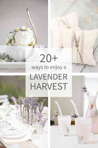 20+ Ways to enjoy a Lavender Harvest.