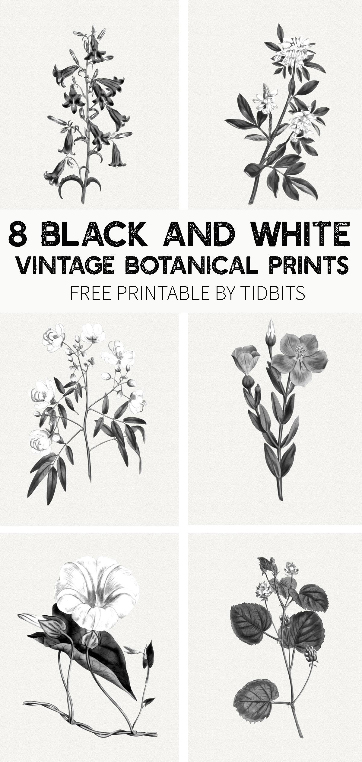 graphic about Printable Prints named Cost-free Black and White Classic Botanical Prints - Tidbits