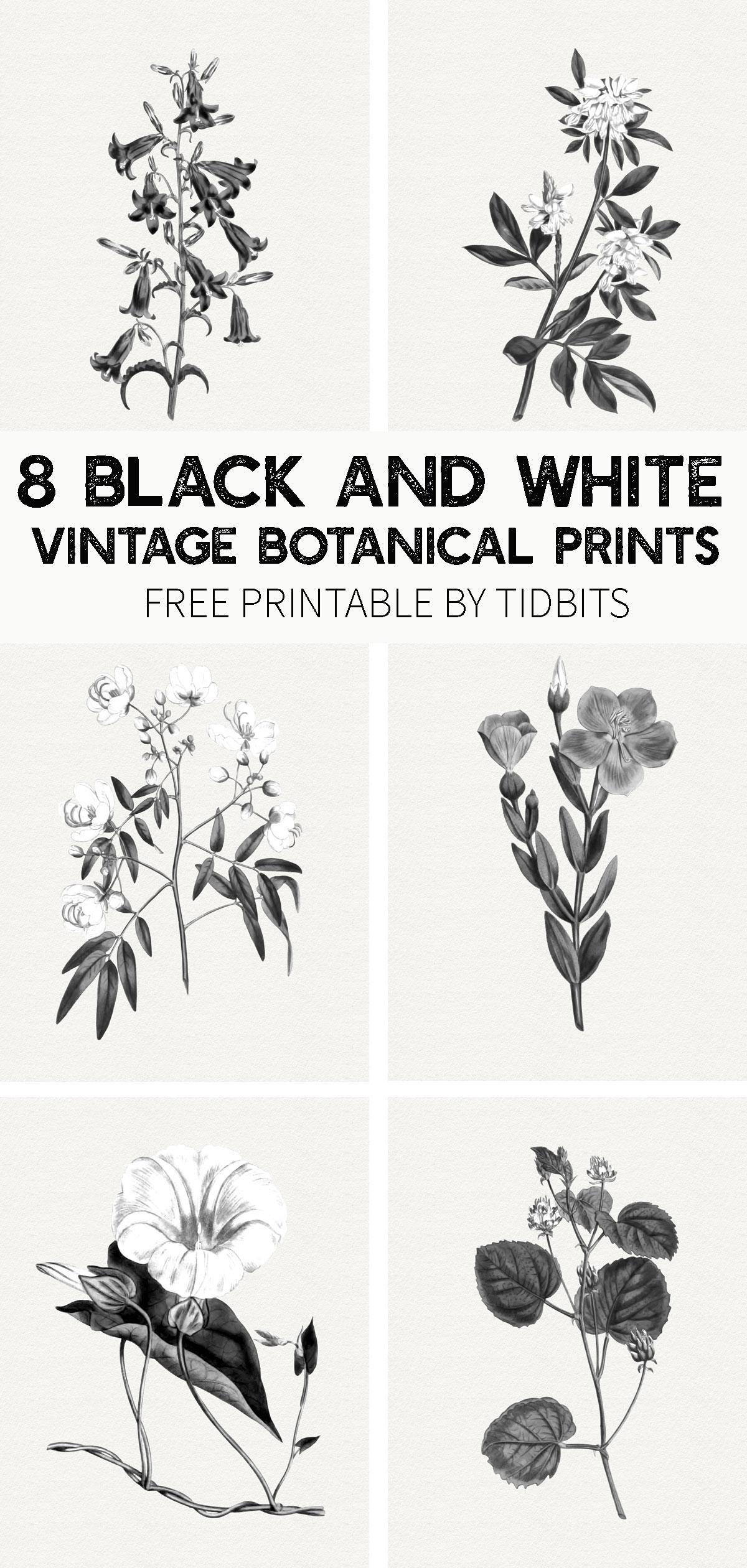 Free black and white vintage botanical prints
