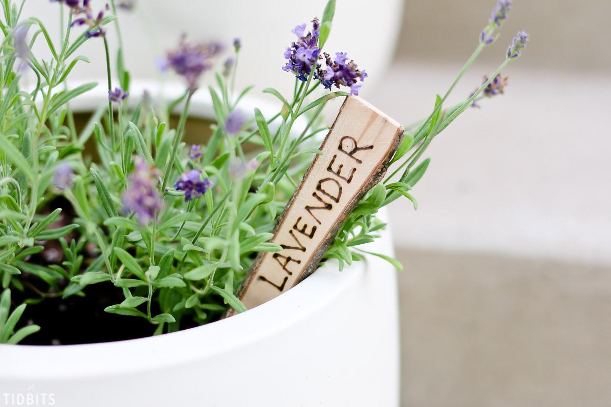 DIY Natural Wood Plant Markers