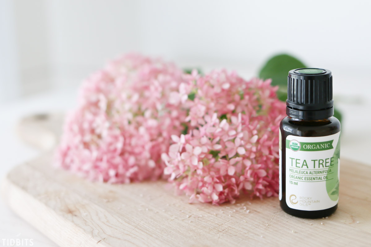 tea tree or melaleuca essential oil