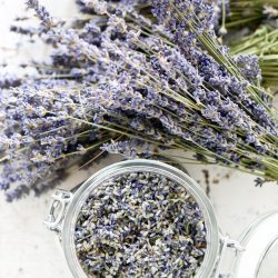How to Remove Dried Lavender Buds from the Stems