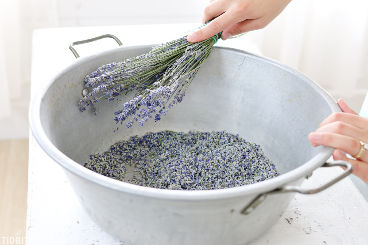 tap lavender on edge of bucket to remove buds
