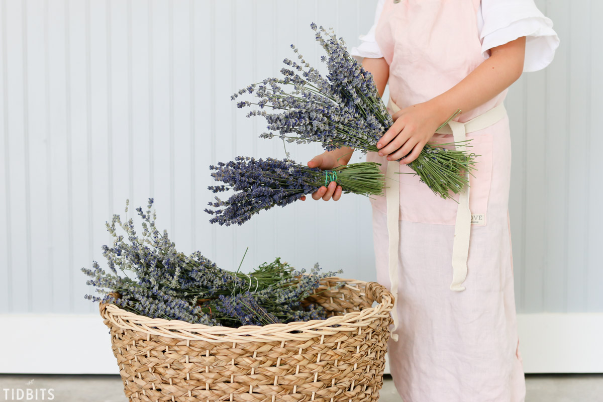 lavender bundles in hand by basket