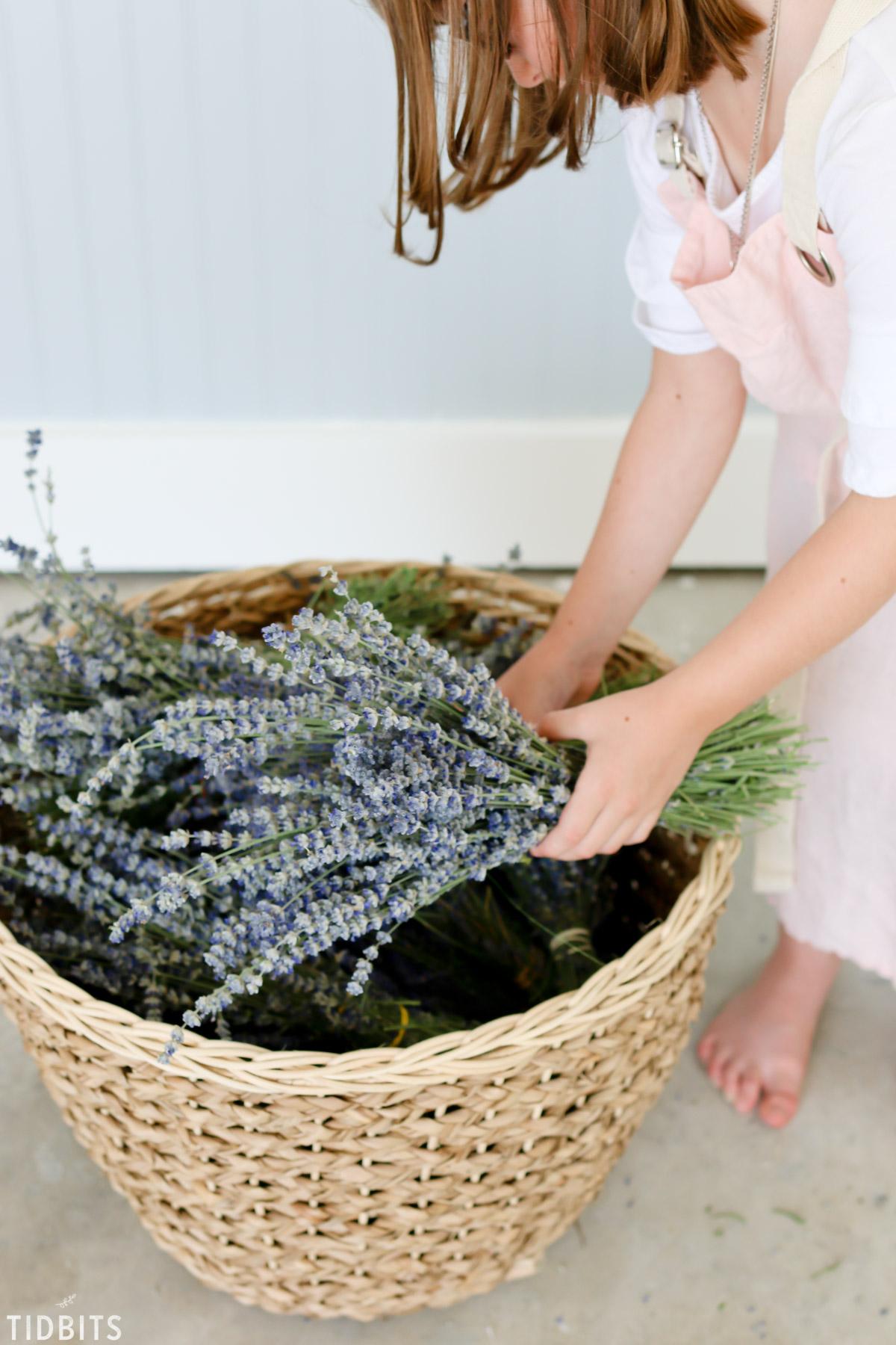 girl harvesting lavender