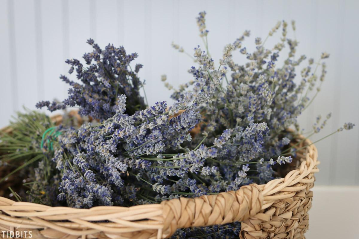 basket full of dried lavender harvest