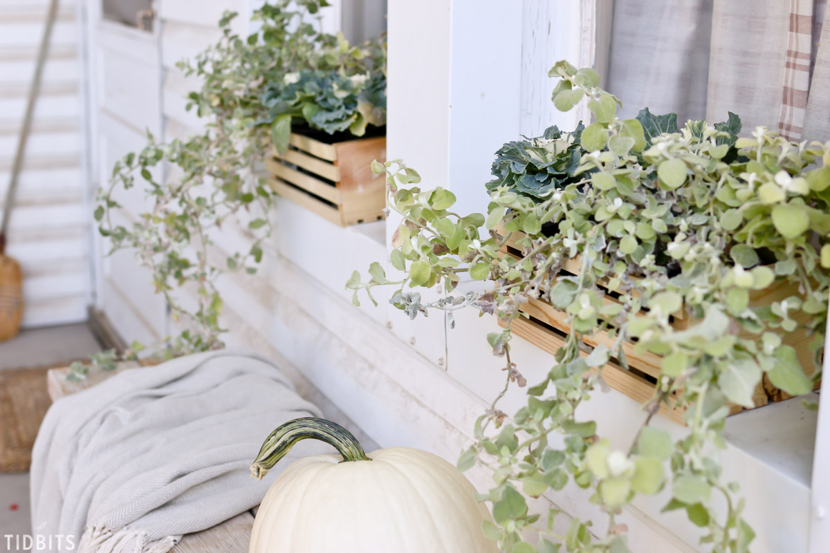 Window boxes with Fall plants