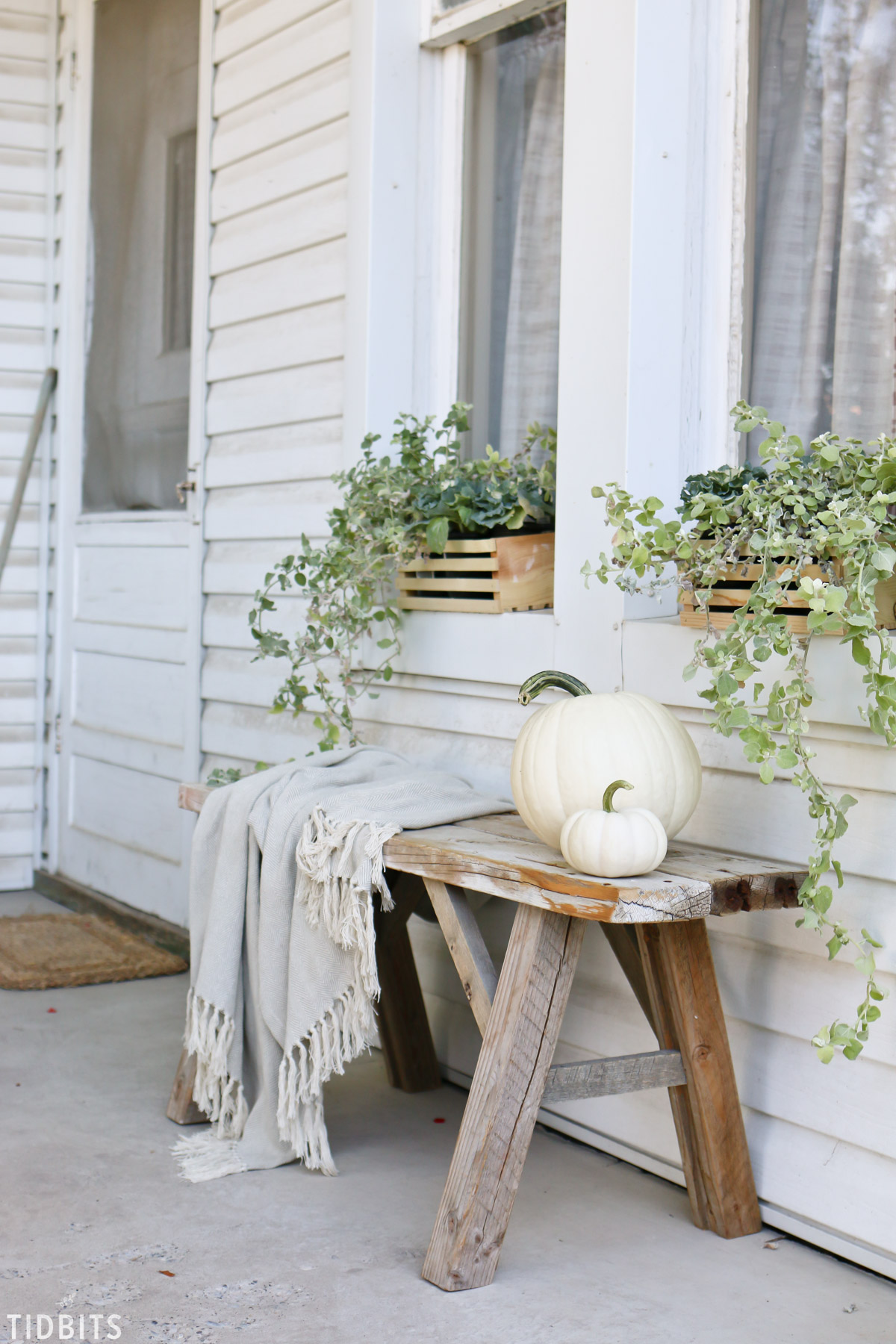 Fall window boxes and planters