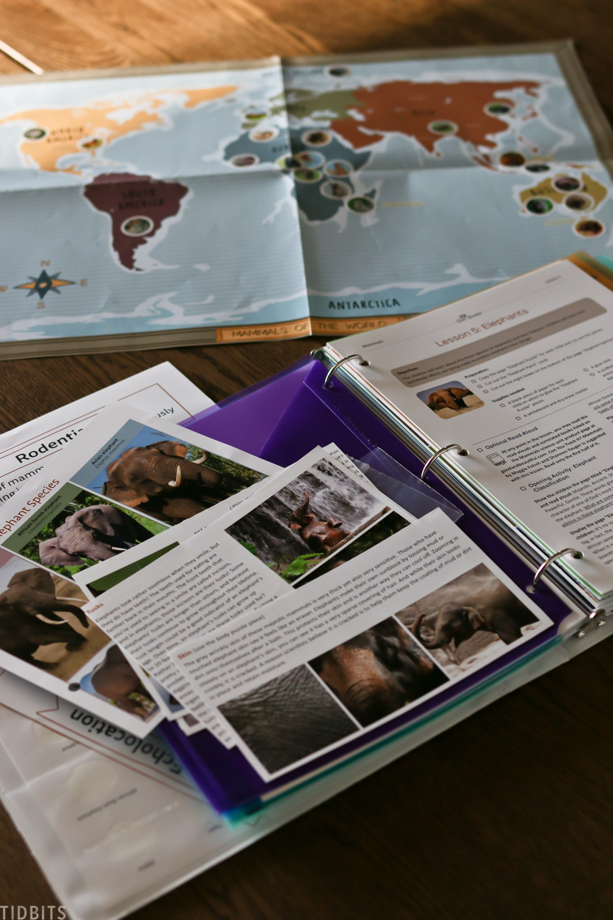 binder for homeschooling filled with educational information on elephants with world map in background