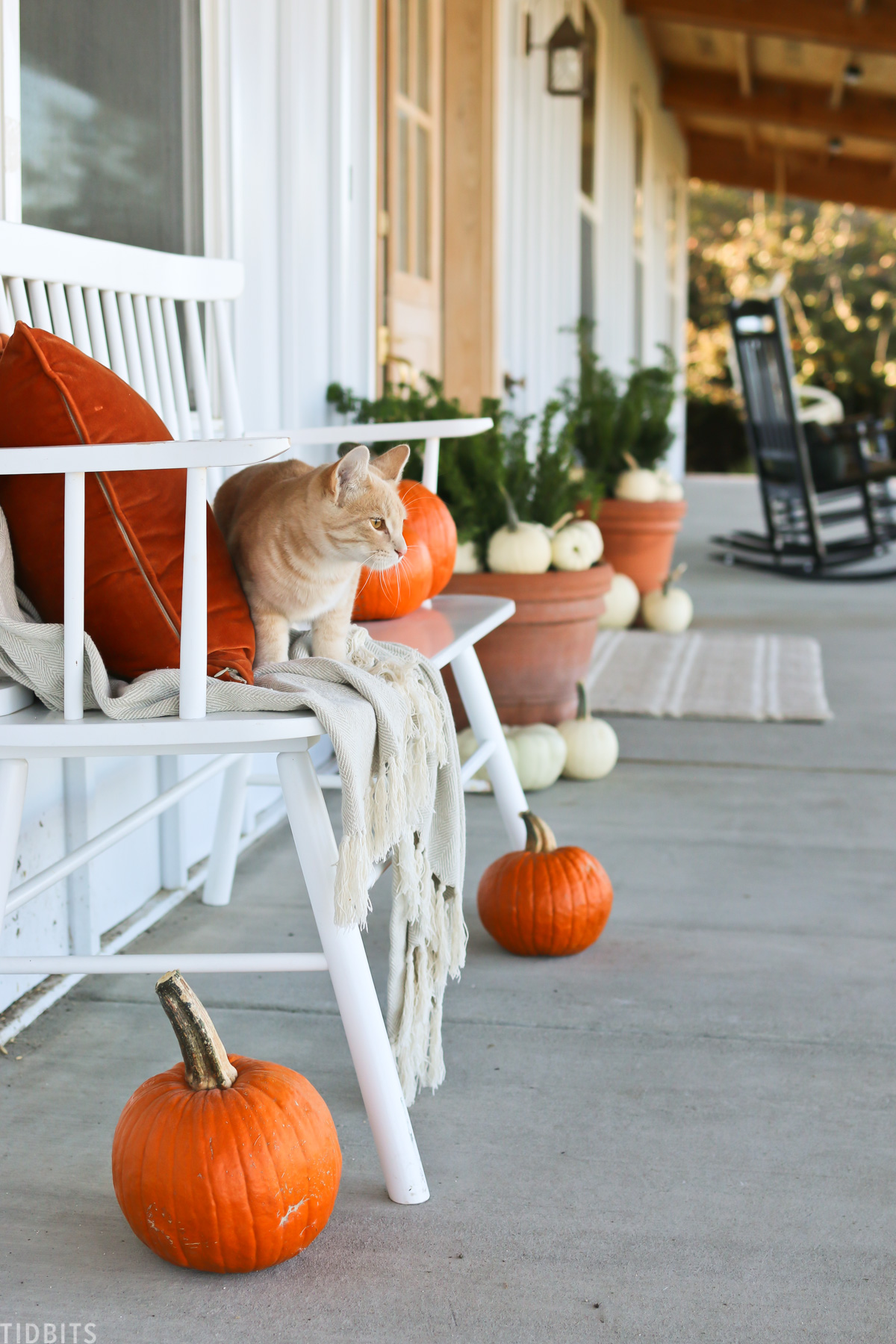 cat is sitting on a bench on a front porch that's decorating for fall with real pumpkins