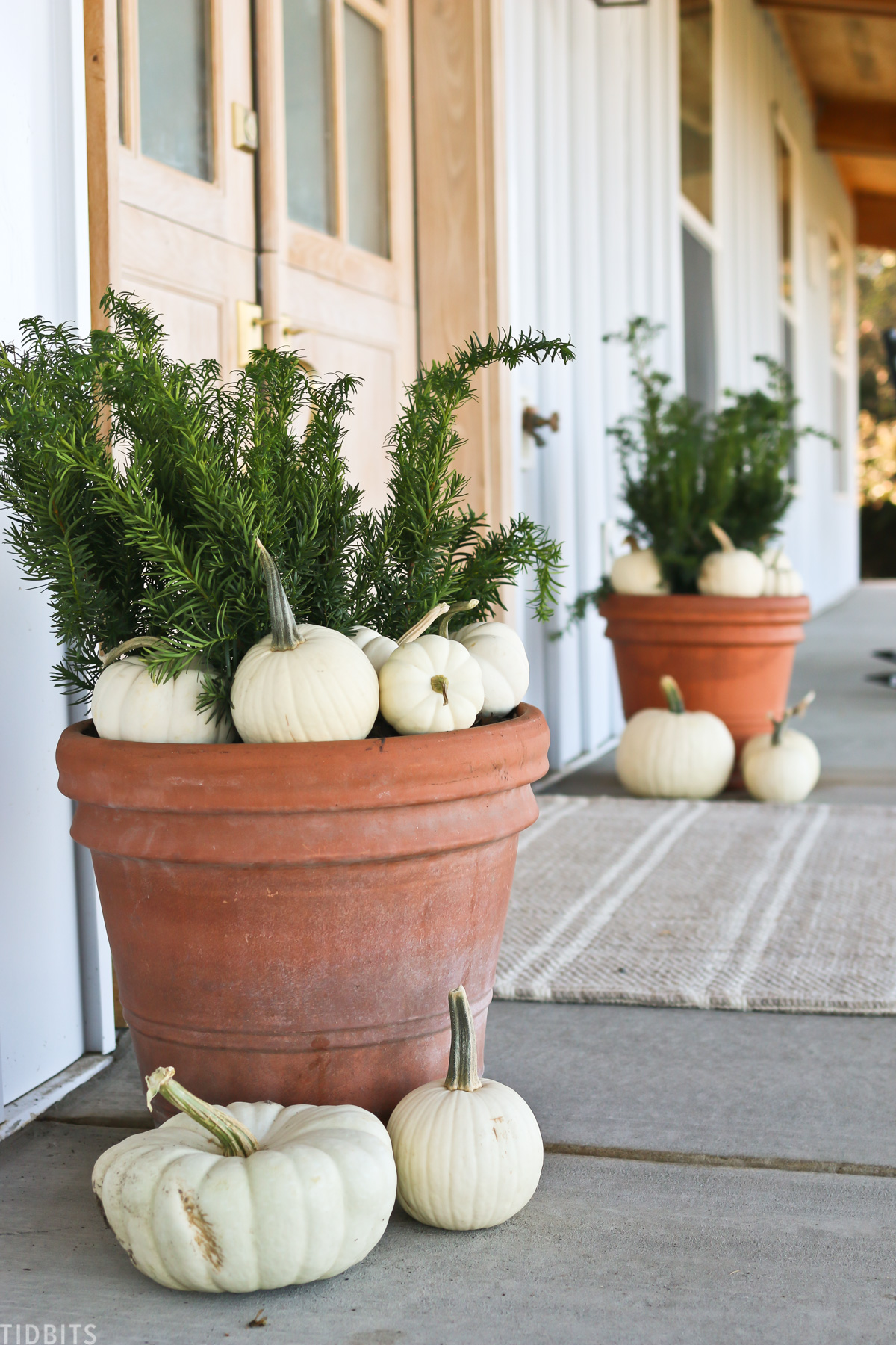 green floral leaves in a large pot with white pumpkins