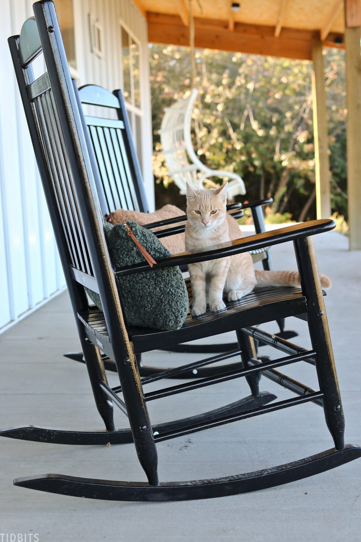 cat sitting on black rocking chair on front porch